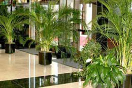 Plants and foliage for hotel and business lobbies